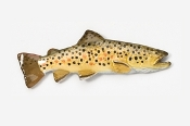 "#126P - 1 3/4"" Brown Trout Hand Painted Pin"