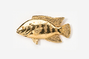#154G - Tilapia 24K Gold Plated Pin