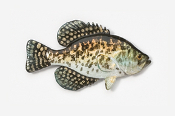 #113P - Black Crappie Hand Painted Pin