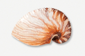 #549P - Nautilus Shell Hand Painted Pin