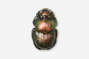 #580P - Scarab / Dung Beetle Hand Painted Pin