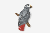 #358P-TG - Timneh African Grey Parrot Hand Painted Pin