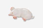 #419EP-A - Albino Mole Hand Painted Pin