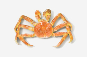 #531BP-C - Cooked King Crab Hand Painted Pin
