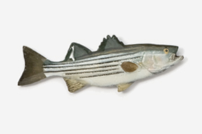 #207P - Striper / Striped Bass Hand Painted Pin